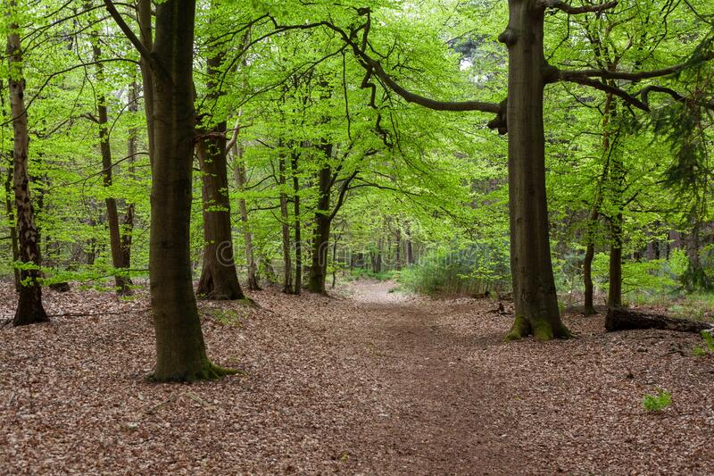 Mesmerizing view of the forest near Zeist in The Netherlands with leaves on the ground. The mesmerizing view of the forest near Zeist in The Netherlands with stock image