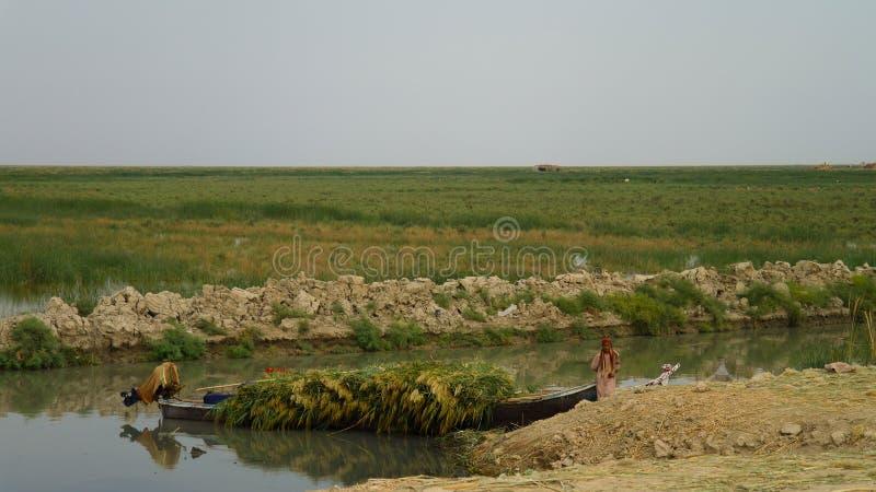 Mesopotamian болота, среда обитания арабов aka Madans Басры Ирака болота стоковые фотографии rf