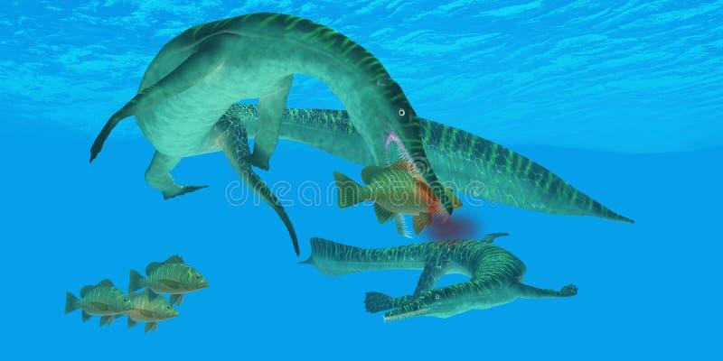 Mesosaurus Marine Reptile. Attacks a Mangrove Jack Snapper fish in a Permian ocean vector illustration
