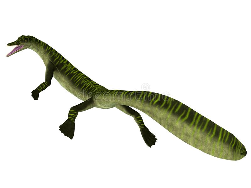 Mesosaurus Marine Reptile Tail. Mesosaurus was a carnivorous marine reptile that lived in the seas of Africa and South America during the Permian Period vector illustration