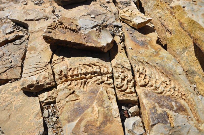 Mesosaurusstenlättnader på Spitzkoppe brukar nära Keetmanshoop royaltyfria bilder