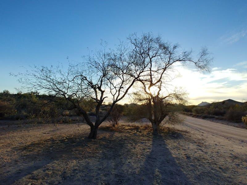 mesquite royaltyfri bild