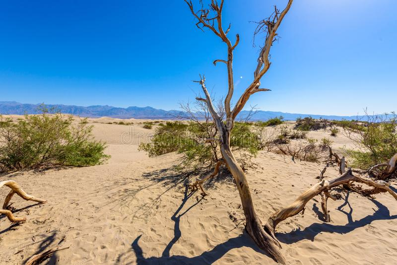 Mesquite sand dunes in desert of Death Valley, California, USA stock photo