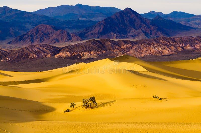Mesquitedyn i Death Valley arkivfoto