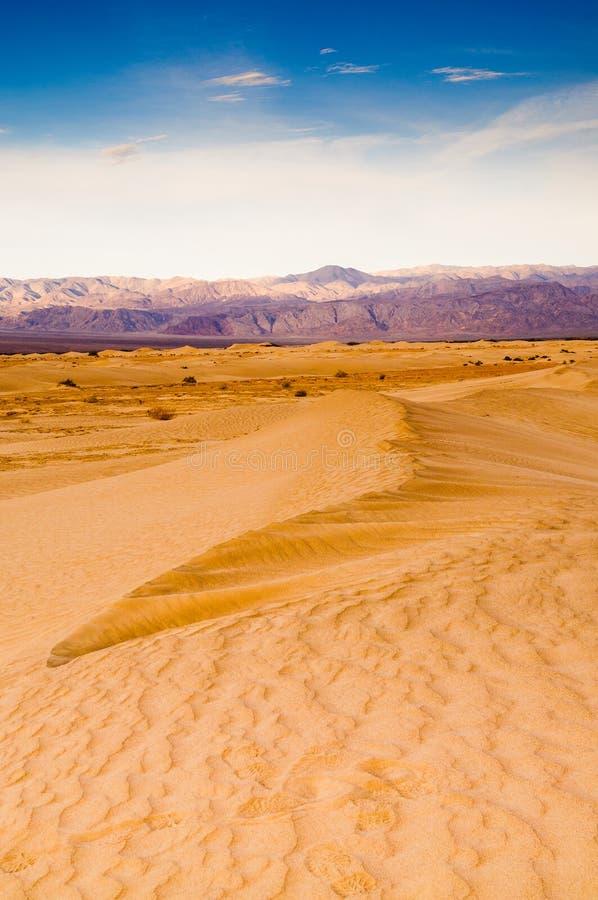 Mesquitedyn i Death Valley arkivbilder
