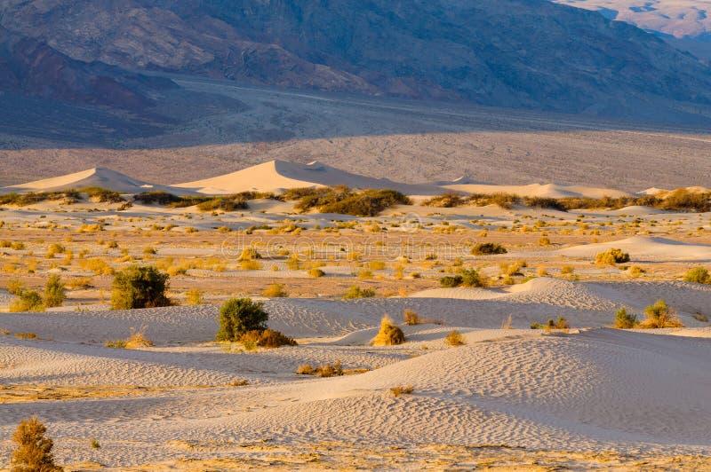 Mesquitedyn i Death Valley royaltyfria foton