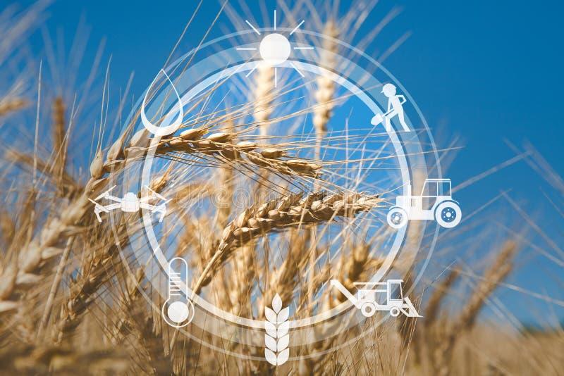 Messaggi ed icone agricoli di Digital sul fondo del campo immagine stock