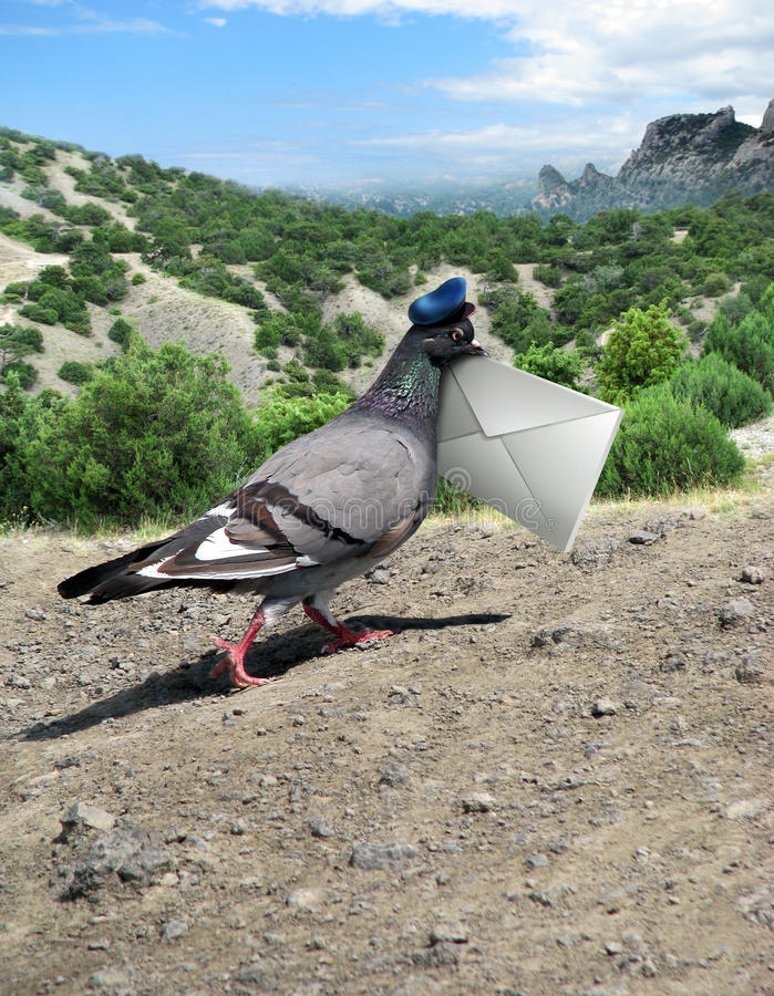 Messenger Pigeon With Letter on a mountain road. And rock royalty free stock image