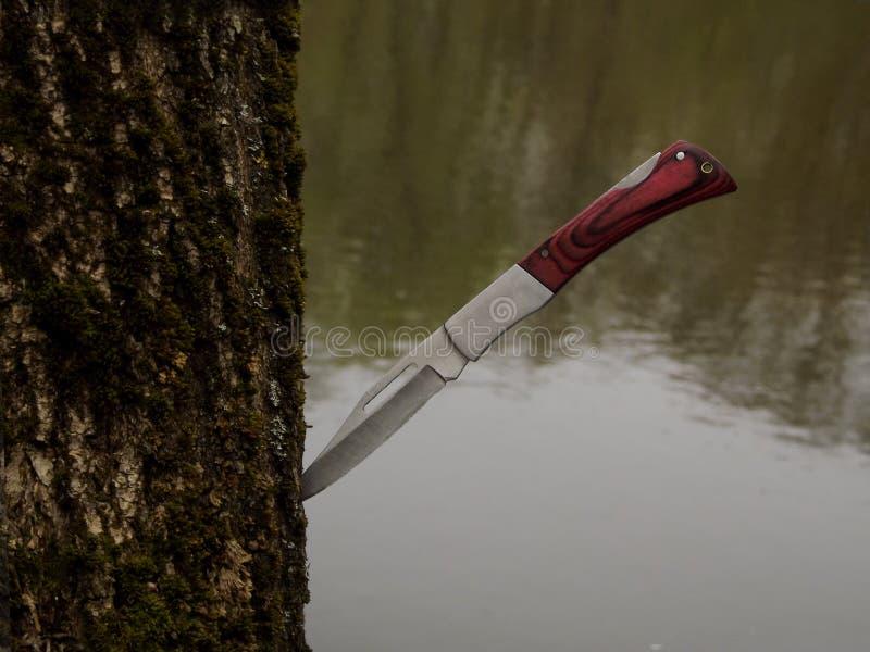 Messer im Baum stockfotografie