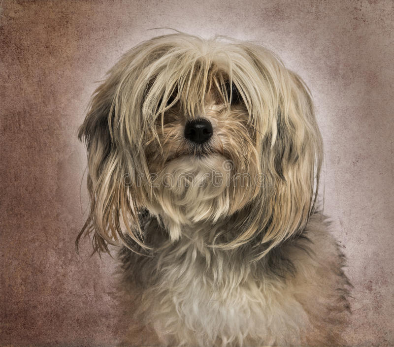 Messy dog facing, on brown vintage. Close-up of a messy dog facing, on brown vintage background stock photo