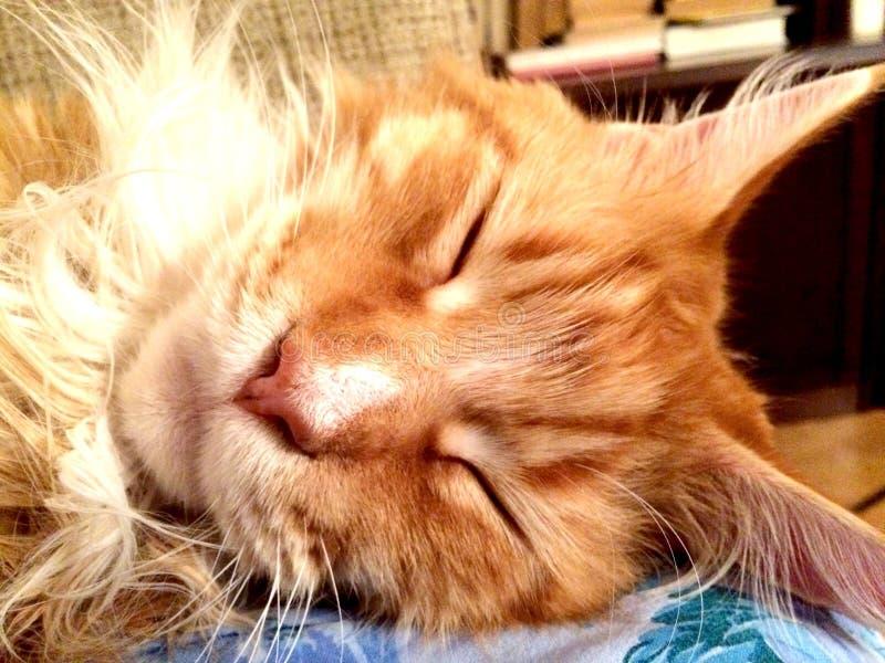 Mest älskad kissekatt i den ursnygga världen royaltyfri bild