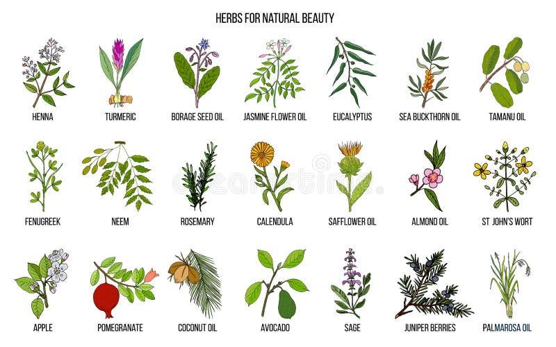 Mest bra örter för naturlig skönhet royaltyfri illustrationer