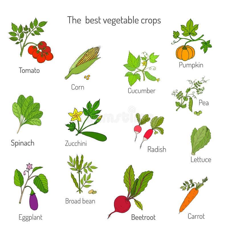 Mest bra grönsakskördar royaltyfri illustrationer