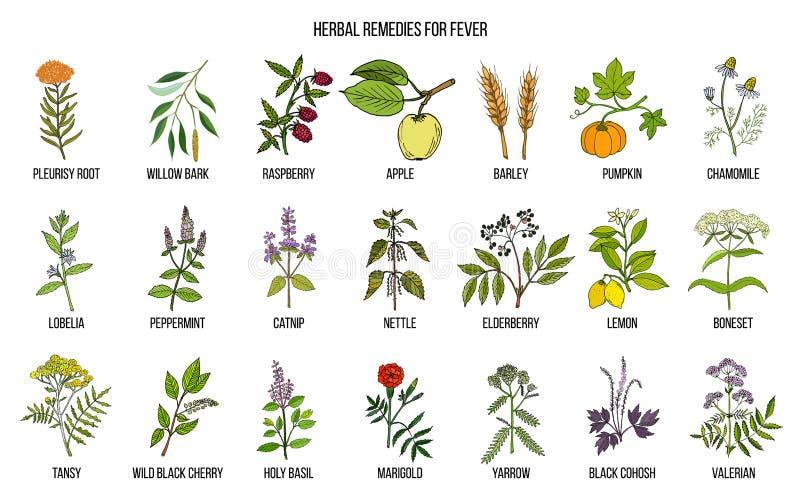 Mest bra medicinska örter för feber royaltyfri illustrationer
