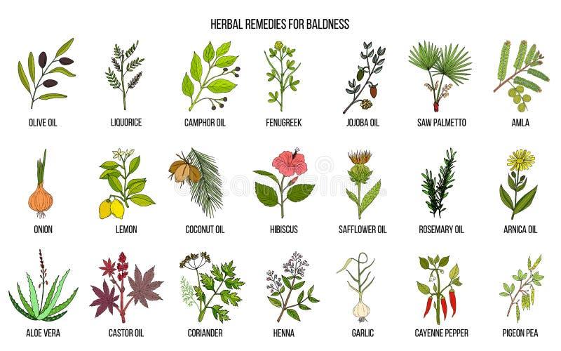 Mest bra växt- boter för flintskallighet vektor illustrationer