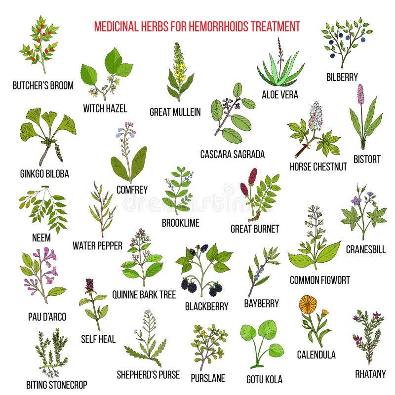 Mest bra växt- boter för hemorrojder stock illustrationer