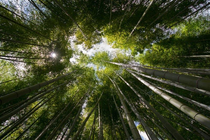 Mest forrest bambu royaltyfri foto