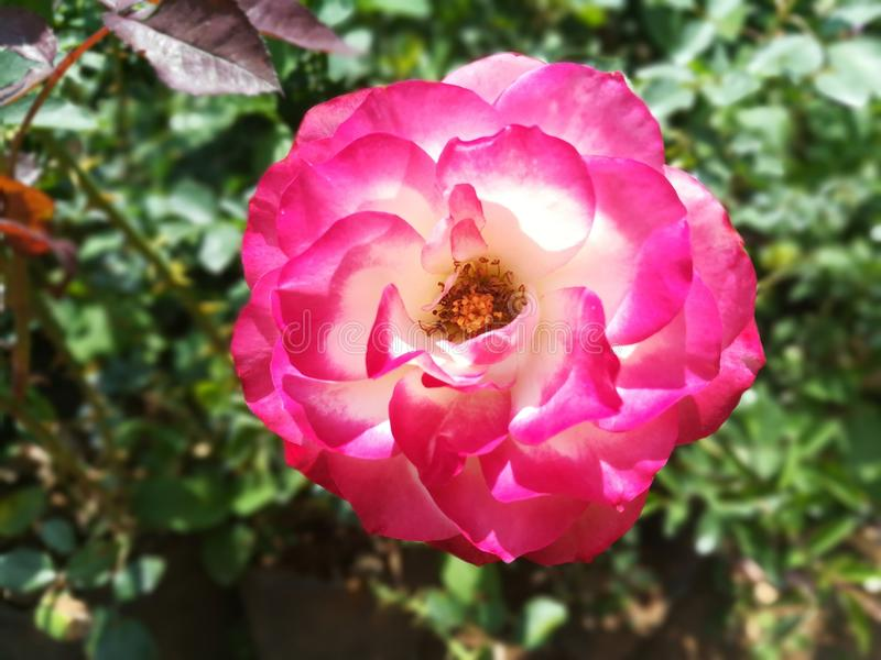 Mest härlig blommor för värld royaltyfri bild