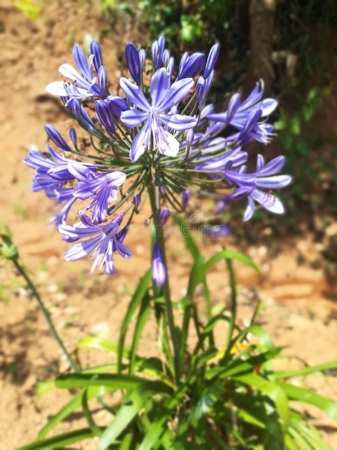Mest härlig blommor för värld royaltyfri foto
