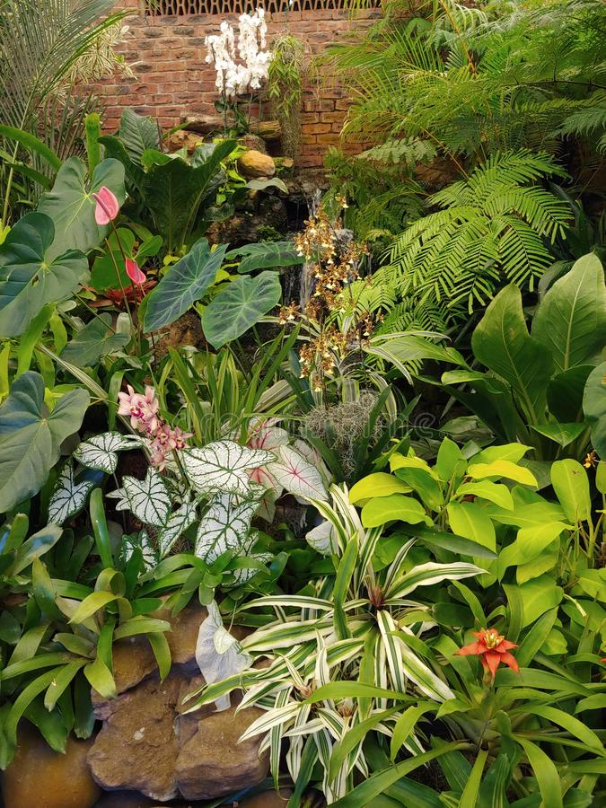 Mest härlig trädgård någonsin royaltyfri bild