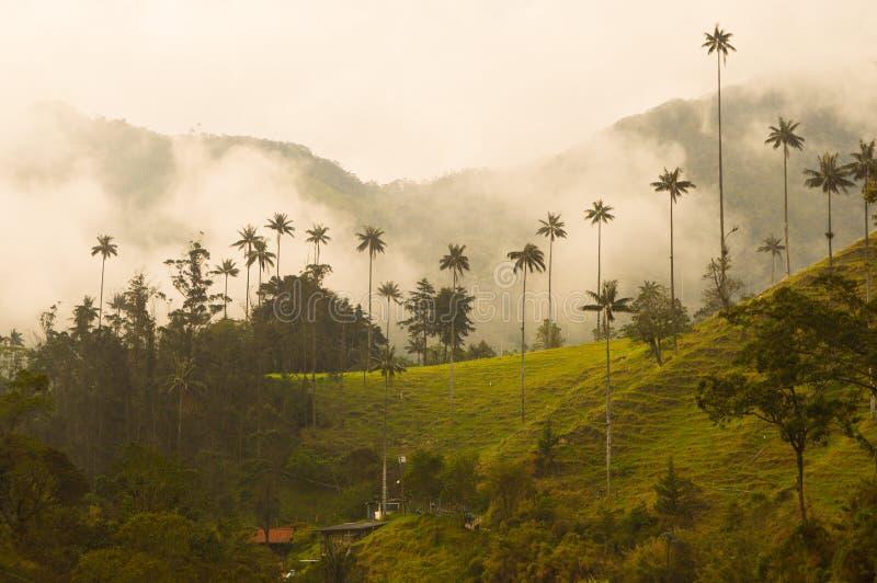 Mest högväxt palmträd i världen i den Cocora dalen arkivbild