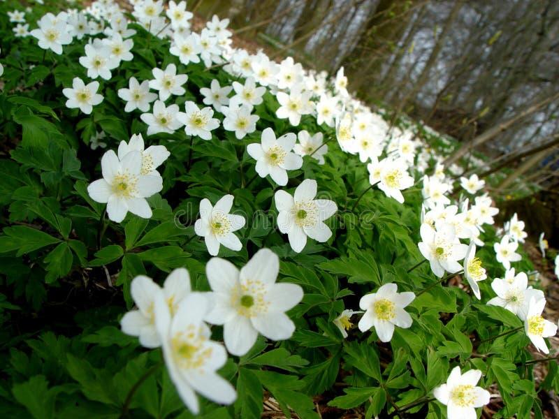Mest Springforest Royaltyfri Fotografi