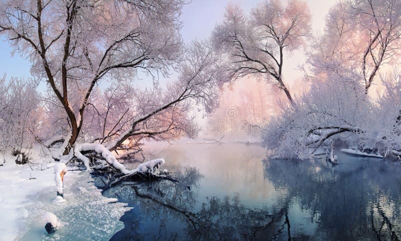 Mestadels lugna vinterflod som omges av träd som täckas med de rimfrosten och snö nedgångar på en härlig rosa morgonlighti royaltyfri fotografi
