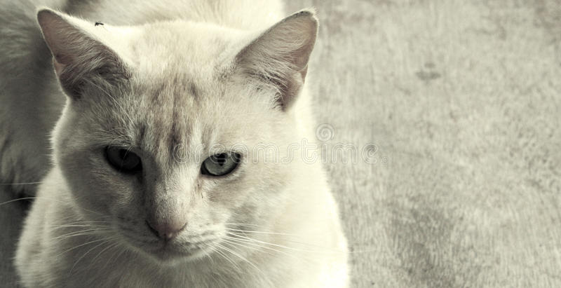 Mestre do gato fotografia de stock royalty free
