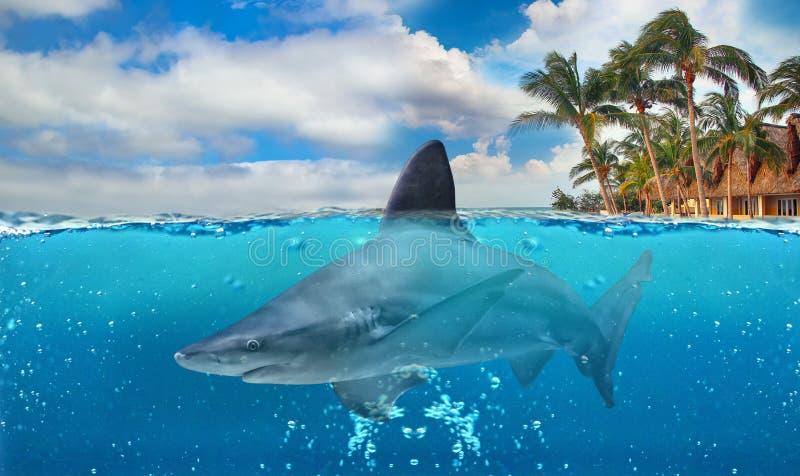 Metà della foto subacquea del paradiso tropicale con il grande squalo amichevole L'acqua è chiara e blu fotografia stock