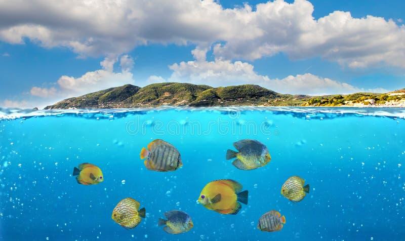 Metà della foto subacquea del paradiso tropicale con un gruppo di pesci variopinti immagine stock