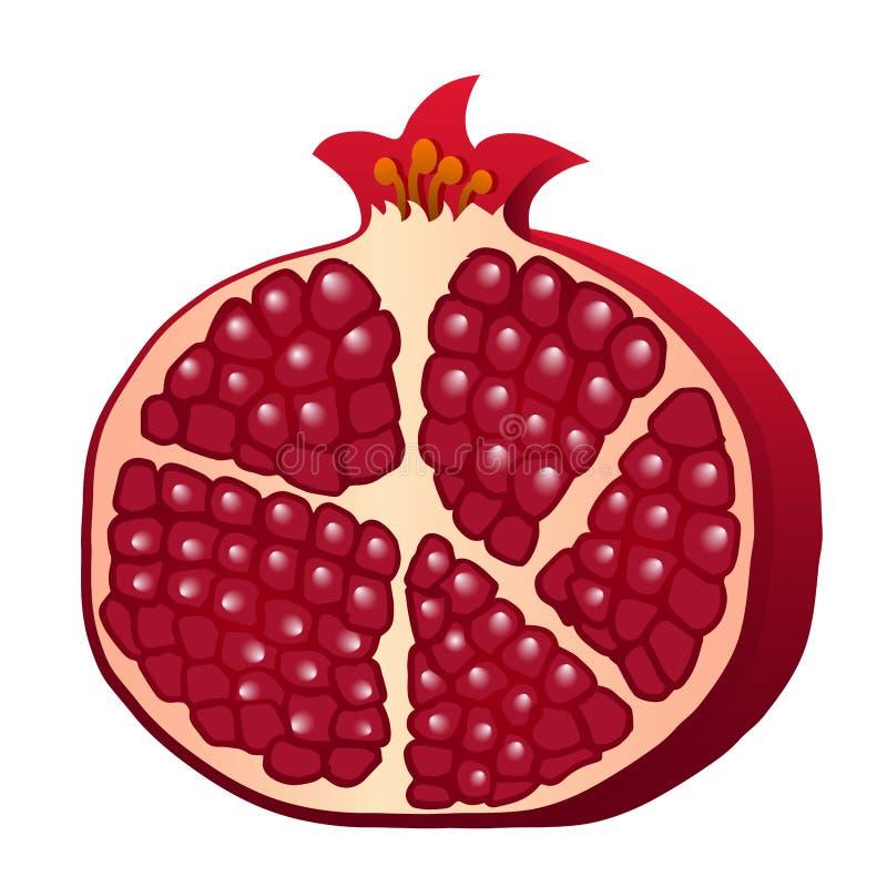 Metà rossa di Borgogna del melograno isolata su fondo bianco V illustrazione vettoriale