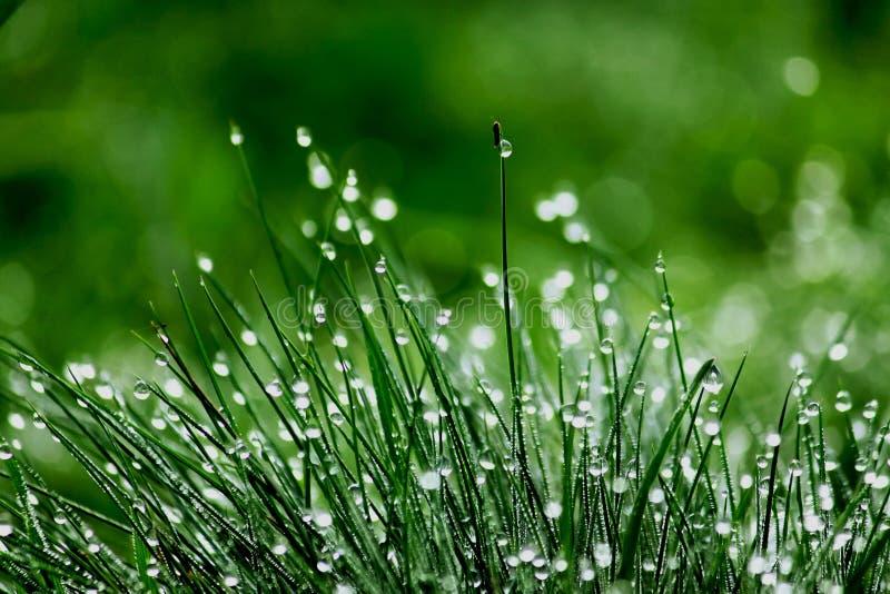 Met dauw bedekt groen gras royalty-vrije stock afbeelding