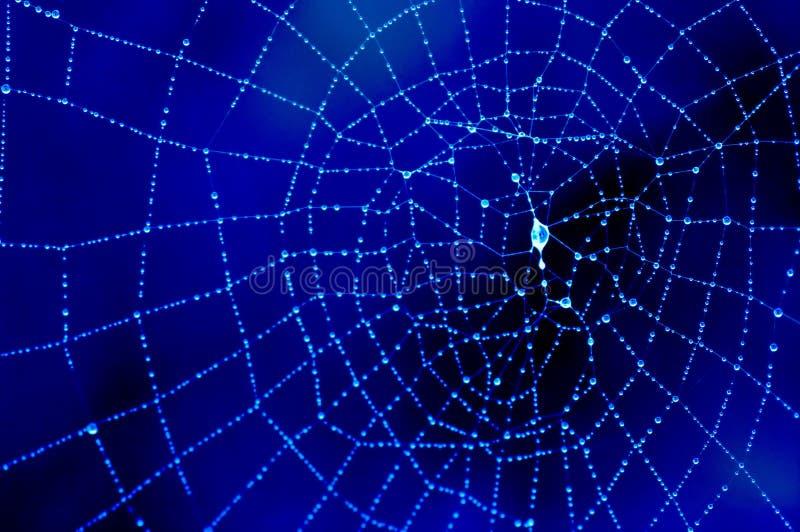 Met dauw bedekt spinneweb in blauw stock foto