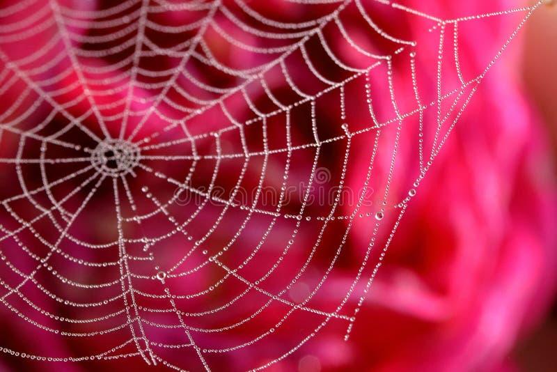 Met dauw bedekte Spiderweb royalty-vrije stock foto