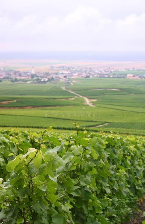Met dauw bedekte wijnstokken in Frankrijk stock foto