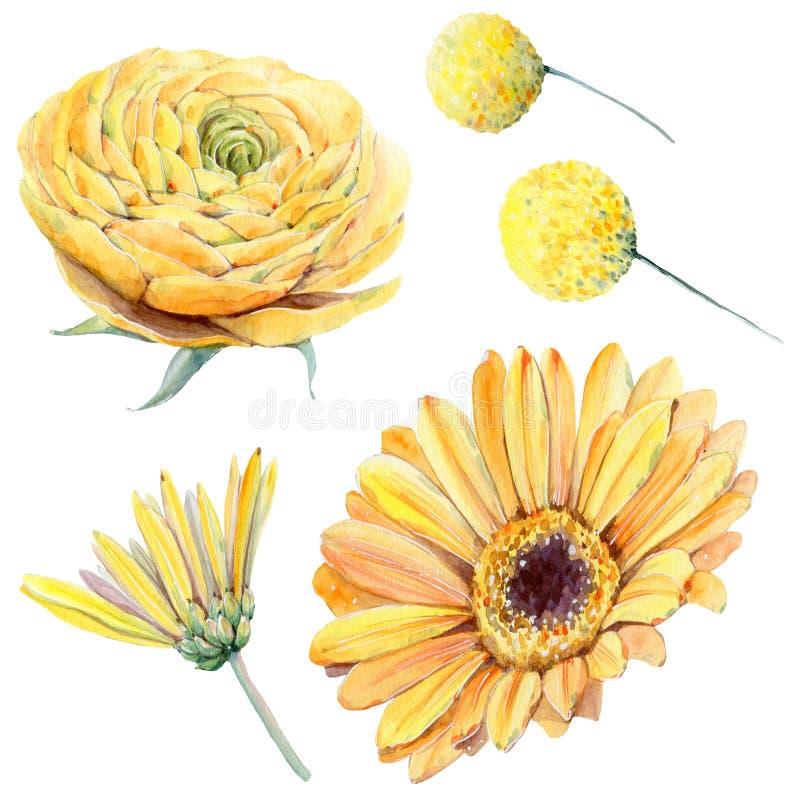 Met de hand geschilderde die waterverfbloemen in uitstekende stijl worden geplaatst stock illustratie