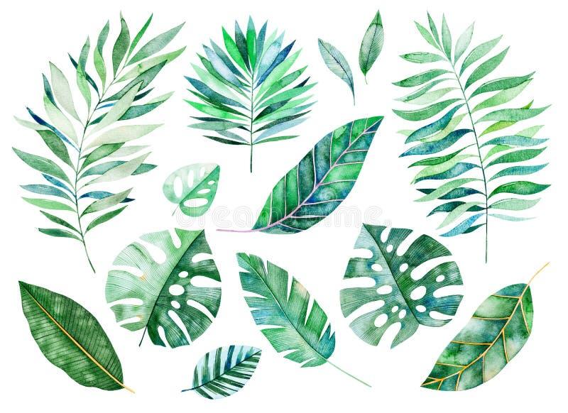 Met de hand geschilderde waterverf bloemenelementen Waterverfbladeren, takken royalty-vrije illustratie