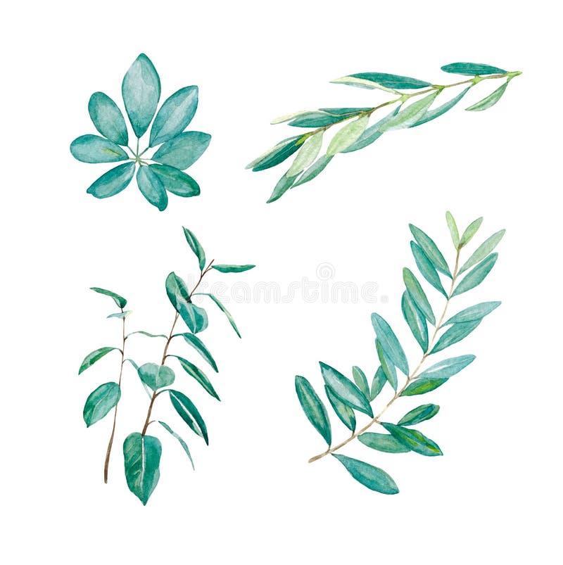 Met de hand geschilderde waterverf groene reeks Geïsoleerdt blad royalty-vrije stock afbeeldingen