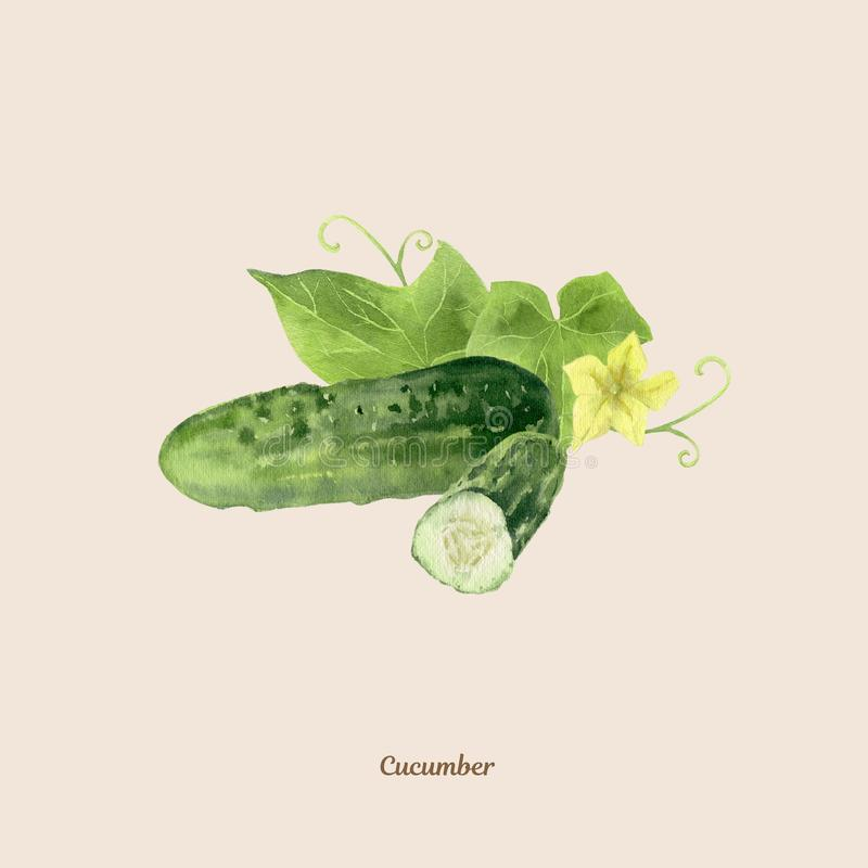Met de hand geschilderde waterverfaffiche met komkommer stock illustratie