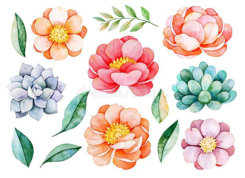 Met de hand geschilderde waterverfpioenen, bloemen, succulents, tak en bladeren vector illustratie