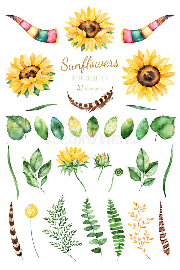 Met de hand geschilderde waterverfzonnebloemen heldere waterverf 31 clipart van zonnebloemen, bladeren, takken, veren, hertenhoor stock illustratie