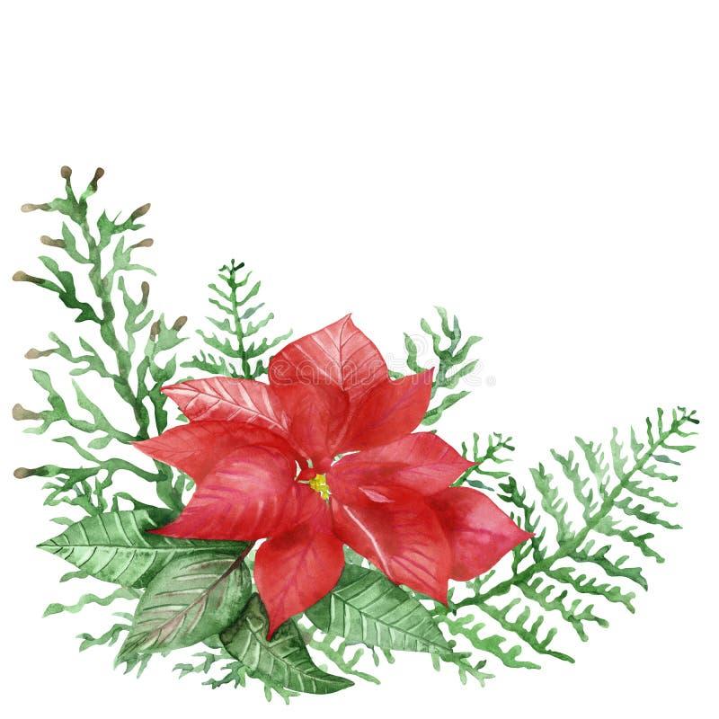Met de hand geverfde natuurplanten met een rode bloempunsettia en groene bladeren en takken, met een hand, met een waterkleur vector illustratie