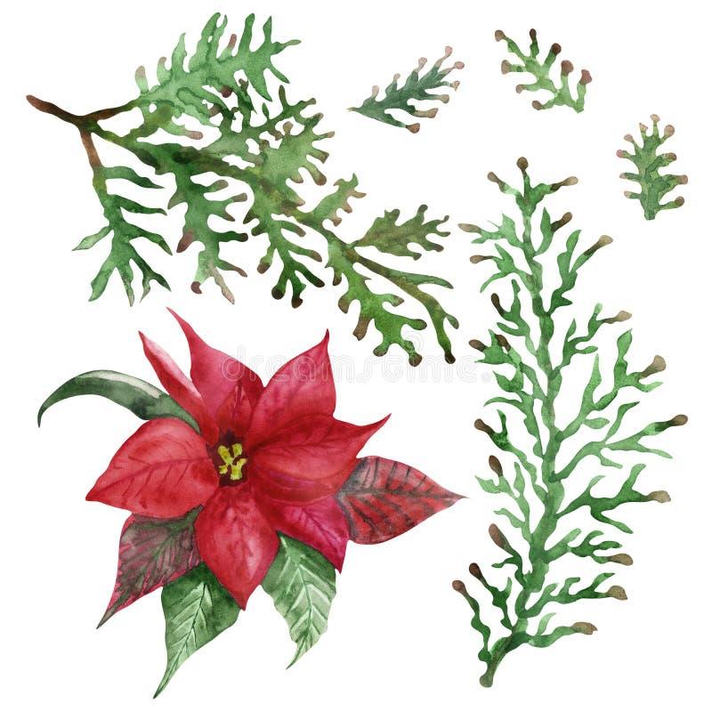 Met de hand geverfde natuurplanten met een waterkleur, met rode bloempunsettia, rode en groene bladeren en groene takken royalty-vrije illustratie