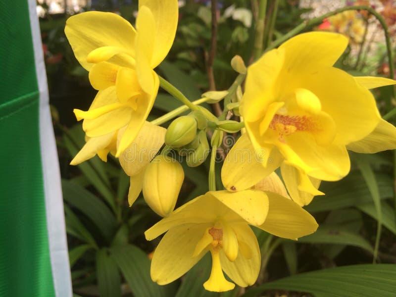 Met een bloem van de gele tak van de grondorchidee royalty-vrije stock afbeeldingen