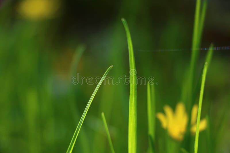 Met een warme bron van het windgras stock fotografie