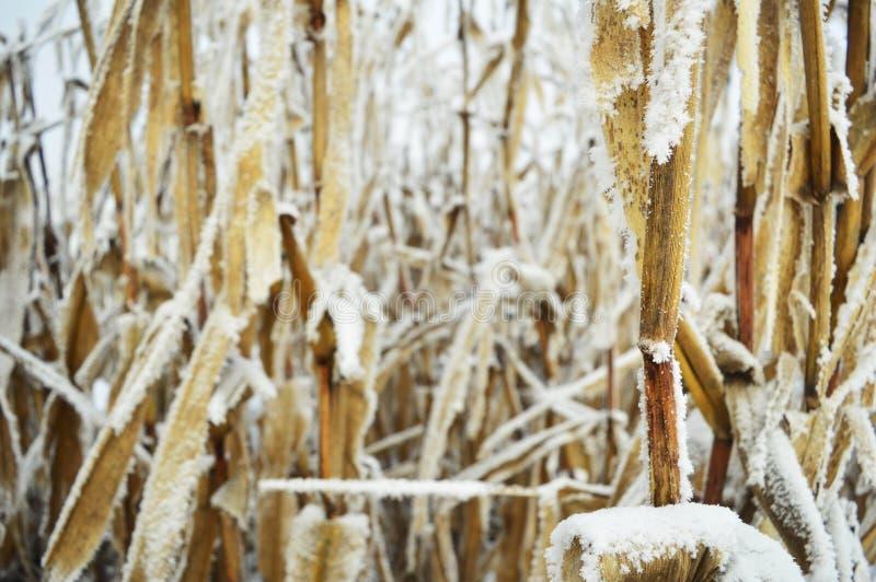 Met en place l'hiver photo libre de droits