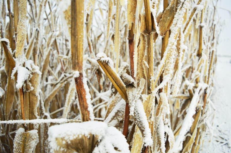 Met en place l'hiver photos stock