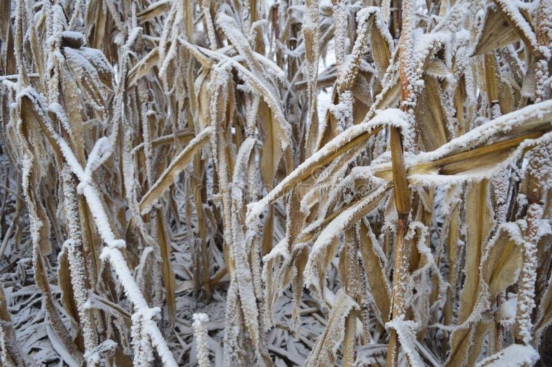 Met en place l'hiver images libres de droits
