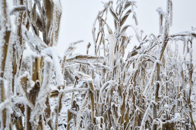 Met en place l'hiver photo stock