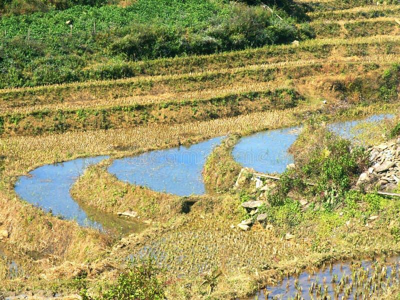 met en place la terrasse de riz image libre de droits